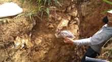 Outcrop Samples 0.6 Metres of 102 Grams Gold and 637 Grams Silver per Tonne in Megapozo Trench, and Expands Land Package
