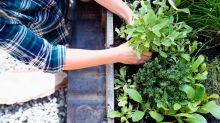 Kräutergarten auf dem Balkon – das können Minze und Co.