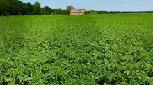 Hemp Is on the Verge of U.S. Legalization: Could MariMed Profit?