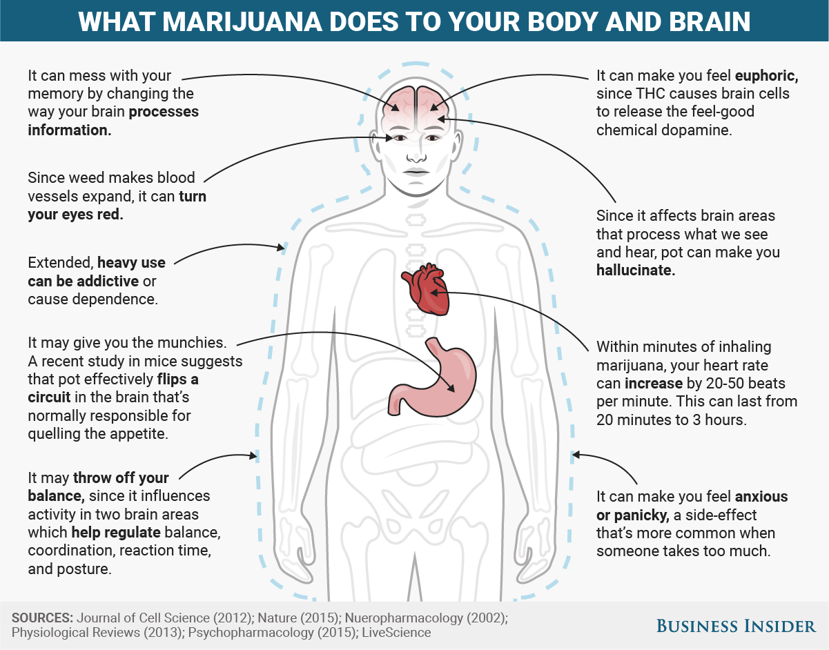 effects of marijuana on the body essay 250000 free the effects that marijuana has on the body papers & the effects that marijuana has on the body essays at #1 essays bank since 1998 biggest and the best essays bank.