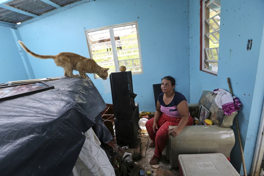 Puerto Rico hurricane animal aid