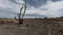 More rain but drought becoming norm: study