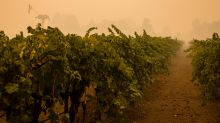 No 'wildfire vintage' here: Winemakers move to blunt risks posed by West Coast fires
