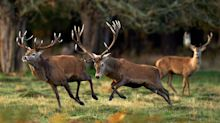 Tory MP Fined After His Puppy Caused A Stampede Of Deer