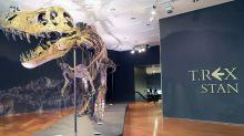 Un T-Rex vendu 31,8 millions de dollars, record pulvérisé pour un dinosaure