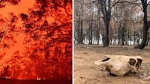 The 'horrendous' problem being ignored amid bushfire disaster