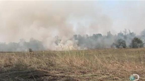 Prescribed Fires Help Prairies