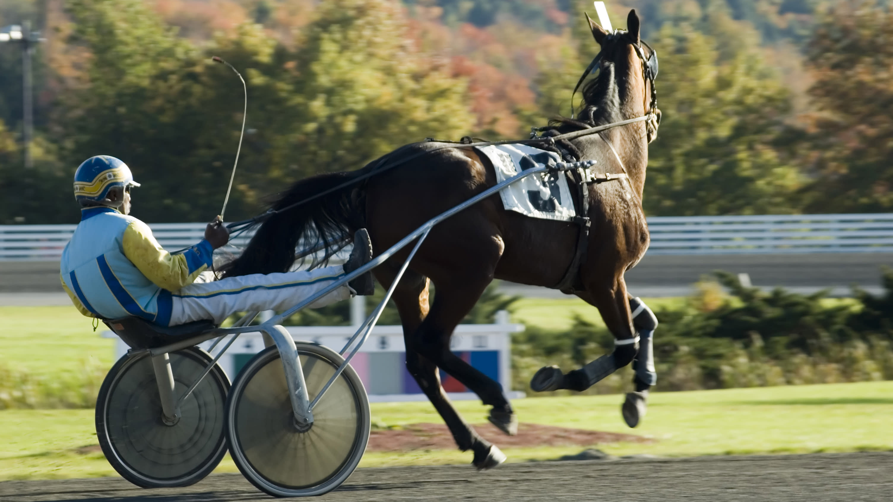 Girl, 2, fighting for life after getting hit by starting gate at harness racing track