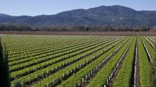 Napa Winemakers Are Pledging Over $1 Million to Make the Wine Industry More Inclusive