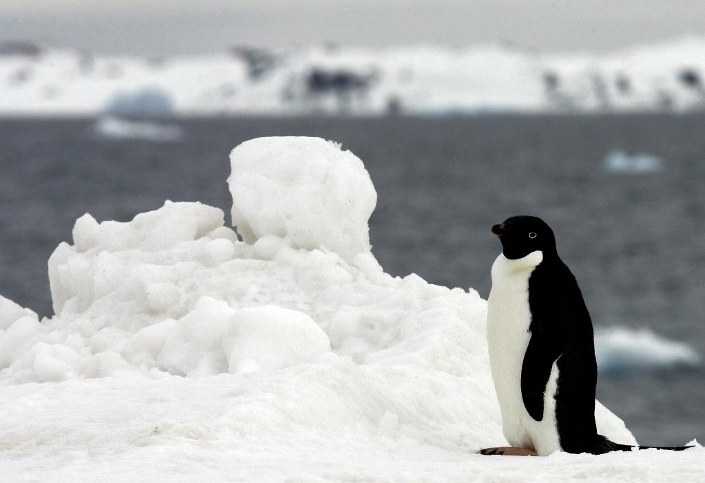 Antartica is considered critical for scientists to study how marine ecosystems function and to understand the impacts of climate change on the ocean (AFP Photo/Rodrigo Arangua)