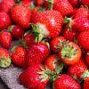 鮮紅多汁,質地柔軟 酸甜適中,氣味芳香 全程採用低溫配送