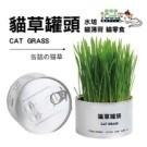■ 新鮮貓草療育聖品。 ■ 發芽率及高,不怕失敗。