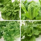 無農藥污染,食用安心、健康有保障,種類多樣可搭配自已喜愛的水果、生菜、肉類、海鮮...等等。