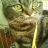 Siluman_Kucing