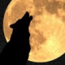 Toni_The_Wolf_242526