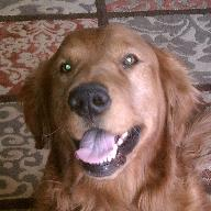 Walt Dog