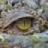 Croc Killa