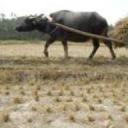 Nông dân Zingme