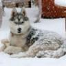 Loki Wolfchild