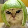 Mystique Kitten Warrior Punk !
