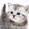 I'm a kitty