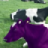 A PURPLE COW