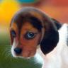 ~future vet24~