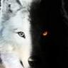 Lobo na Busca do equilíbrio