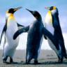 Penguinology Penguinism Penguinist