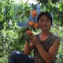 前【園藝】分類管理員-陸伍蔬果農場