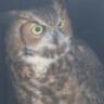 Owl Be Darned!