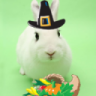 Wascally Wabbit Thanksgiving