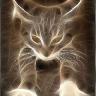 Catkeypurr