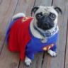 SuperPug