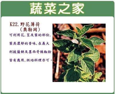 【蔬菜之家】K22.野花薄荷(奧勒岡)...