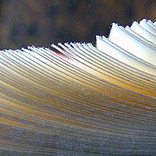 宇陞 ~安徽涇縣 加厚秘制噴漿檀皮宣~4尺全開68~138cm~零售10張~書法國畫創作用