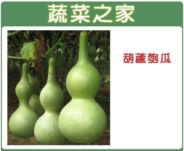 【蔬菜之家】G32.葫蘆匏瓜種子10顆(觀賞用,煮食亦可.蔬菜種子)