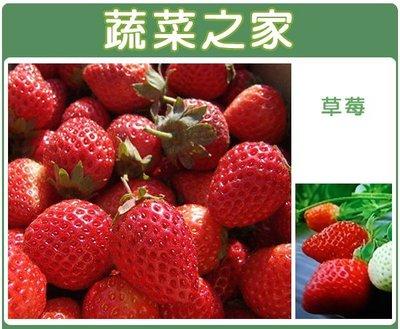 全館滿799免運【蔬菜之家00I05】大包裝.草莓種子(阿里巴巴)600顆(蔬菜種子)※此商品運費請選宅配貨運※
