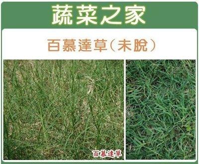 【蔬菜之家】M02.百慕達草種子(未脫...