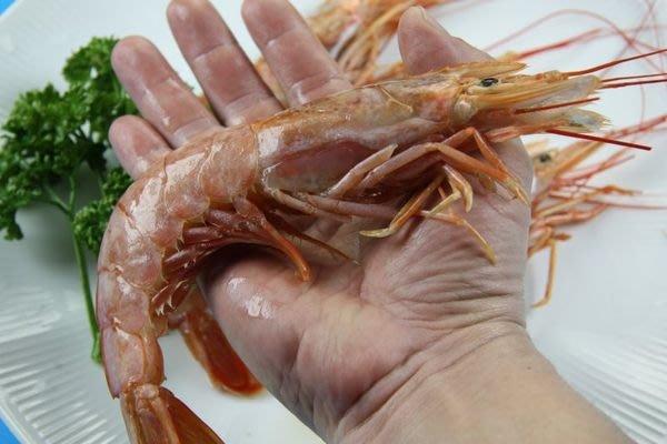 【烤肉系列】天使紅蝦 /1尾(L1 10/20)~為一般白蝦的四五倍大~生食等級~來自南美洲阿根廷海域