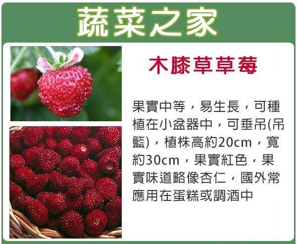 【蔬菜之家】I06.木膝草草莓種子8顆(易生長.可種植小盆中.可垂吊.蔬菜種子)