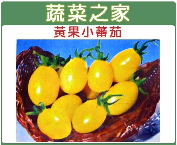 【蔬菜之家】G21.黃果小番茄種子10顆(短橢圓型果,果皮黃色。蔬菜種子)
