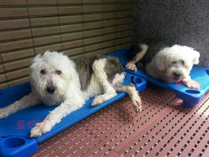 台灣製寵物專用睡床(大中小犬都適用)~透氣網布~清洗方便~歡迎團購◎童心玩具1館◎
