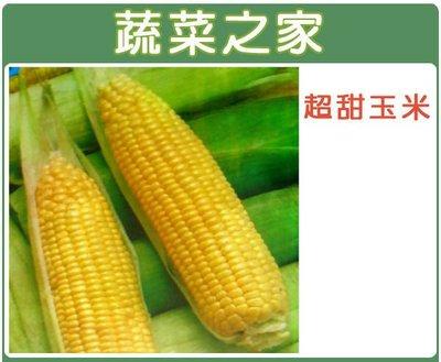 【蔬菜之家】G07.超甜玉米種子30顆(F1.黃穗.米皮薄.柔嫩.甜度高.耐儲放.品質優.蔬菜種子)