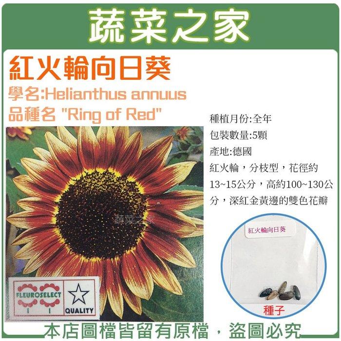 【蔬菜之家】H48.紅火輪向日葵種子5顆(紅火輪,分枝型,花徑約13~15公分,高約100~130公分.花卉種子)