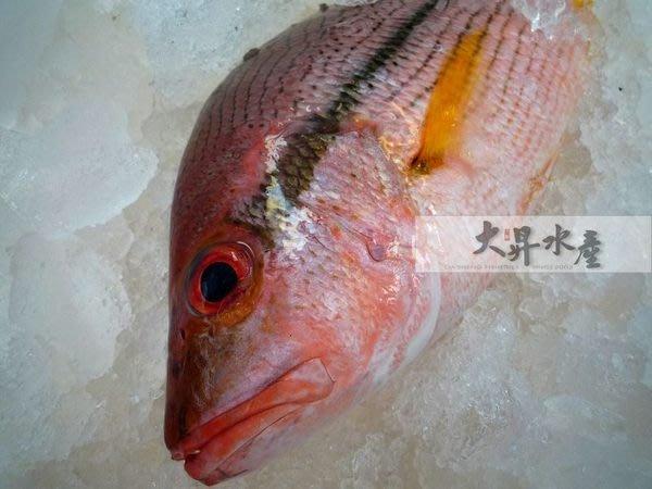 【大昇水產】寶島台灣現流冰鮮魚_赤筆(非養殖)