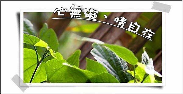 【檜樂森林歡迎您】1