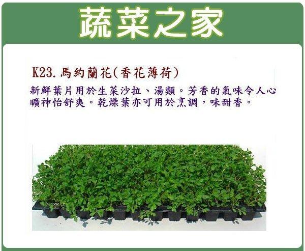【蔬菜之家】K23.馬約蘭花(香花薄荷)種子1000顆(新鮮葉片用於生菜沙拉湯類.香草種子)