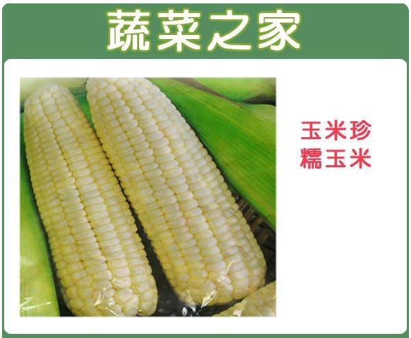 【蔬菜之家】G06.玉美珍(珍珠糯玉米)種子20顆(植株矮.穗粗大Q甜.易照顧.產量多.蔬菜種子)