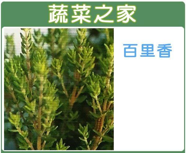 【蔬菜之家】K02.百里香種子200顆(菜餚常用調味料,泡茶消脹氣,泡澡可舒緩鎮靜.香草種子)